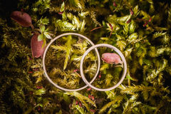Wedding engagement rings close up lying on moss. Stock Images