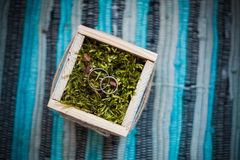 Wedding engagement rings close up lying on moss. Royalty Free Stock Photos