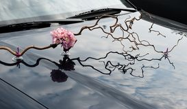 Wedding floral decoration on the hood of a car Royalty Free Stock Image