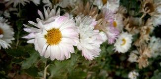 Wedding flower in the garden stock photography