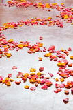 Wedding Flower Petals Royalty Free Stock Images