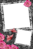 Wedding frame with roses Royalty Free Stock Images