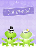 Wedding of frogs Stock Photo