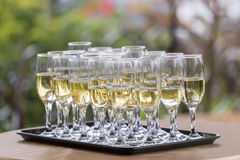 Wedding glasses filled with champagne, ready to be served Royalty Free Stock Photo