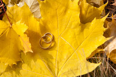 Wedding gold rings Royalty Free Stock Images
