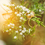Wedding gold rings on beautiful green plant Stock Image