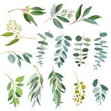 Wedding greenery Eucalyptus twigs. Watercolor illustrations. Wedding greenery twigs. Watercolor illustrations Stock Photo