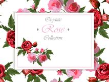Wedding or greeting card design with red roses Stock Illustration