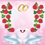 Wedding greeting or invitation card with two swans Stock Image