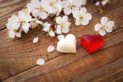 Wedding hearts. Spring. Flowering branch with white delicate flowers on  wooden surface. Royalty Free Stock Image