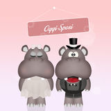 Wedding of hippos Stock Photo