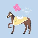 Wedding horse breed vector. Stock Photos