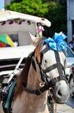 Wedding horse mexico Royalty Free Stock Photography