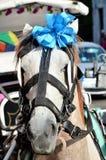 Wedding horse mexico Stock Image