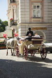 Wedding horses carriage Stock Images