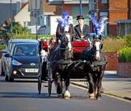 Wedding horses Royalty Free Stock Photo