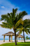 Wedding hut and Palm tree on the beach Stock Photography