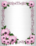 Wedding invitation  backgrounPurple Daisies border Stock Photography