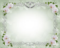 Wedding invitation Border orchids ivy. Illustration and image composition for background, white orchids, ivy floral border, wedding invitation or template with Stock Images