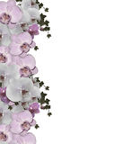 Wedding invitation Border orchids ivy Stock Photos