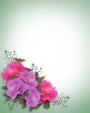 Wedding invitation border Pink Roses. Image and illustration composition lavender and pink roses corner design element for Valentine, Easter, party, wedding royalty free illustration