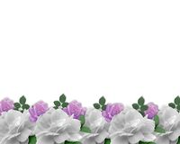 Wedding Invitation Border White Roses Stock Photo