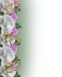 Wedding Invitation Border White Roses Stock Image