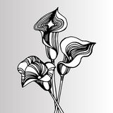 Wedding invitation callas. Calla lily on background. Bouquet of Royalty Free Stock Photos