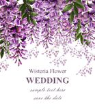 Wedding invitation card with wisteria flowers Vector. Beautiful flower decor. Gorgeous nature beauty designs. Wedding invitation card with wisteria flowers stock illustration