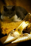 Wedding invitation design with high heels and cat Stock Photos