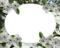 Wedding invitation Dogwood Border Royalty Free Stock Photo