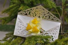 Wedding invitation with flowers. Macro detail of wedding invitation with daffodils flower Royalty Free Stock Photography