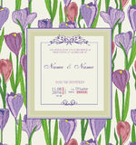 Wedding invitation with flowers. Spring crocus. Stock Photo