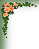 Wedding Invitation Hibiscus Border ivy Stock Photo