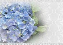 Wedding invitation Hydrangea and lace Royalty Free Stock Images