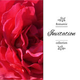 Wedding invitation in romantic style.  EPS,JPG. Invitation card with a red rose. Romantic template with rose petals. Poster with romantic floral view. Wedding Stock Photo