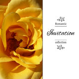 Wedding invitation in romantic style.  EPS,JPG. Invitation card with a yellow rose. Romantic template with rose petals. Poster with romantic floral view Royalty Free Stock Photos