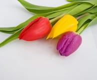 Wedding invitation with tulips. royalty free stock photos