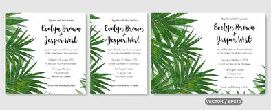 Wedding invite, invitation rsvp thank you card vector floral greenery design: tropical palm leaf howea (kentia) branch green, fol. Wedding invite, invitation stock illustration