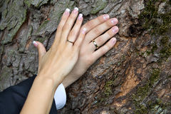 Wedding. Just married couple's hands together on a background of tree bark. Royalty Free Stock Image