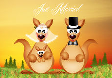 Wedding of kangaroos Stock Images