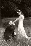 Wedding kiss. Wedding pictures, the couple just married Royalty Free Stock Photography