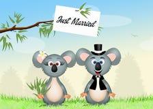 Wedding of koalas Royalty Free Stock Image