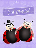 Wedding of ladybugs Stock Photo