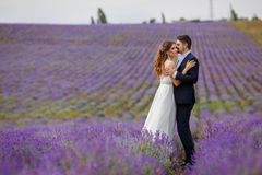 Wedding lavender field. Royalty Free Stock Photos
