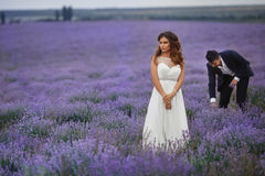 Wedding lavender field. Stock Image