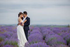 Wedding lavender field. Stock Images