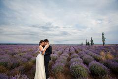 Wedding lavender field. Stock Photo