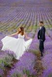 Wedding lavender field. Stock Photography