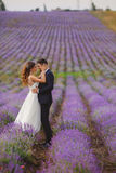 Wedding lavender field. Royalty Free Stock Image